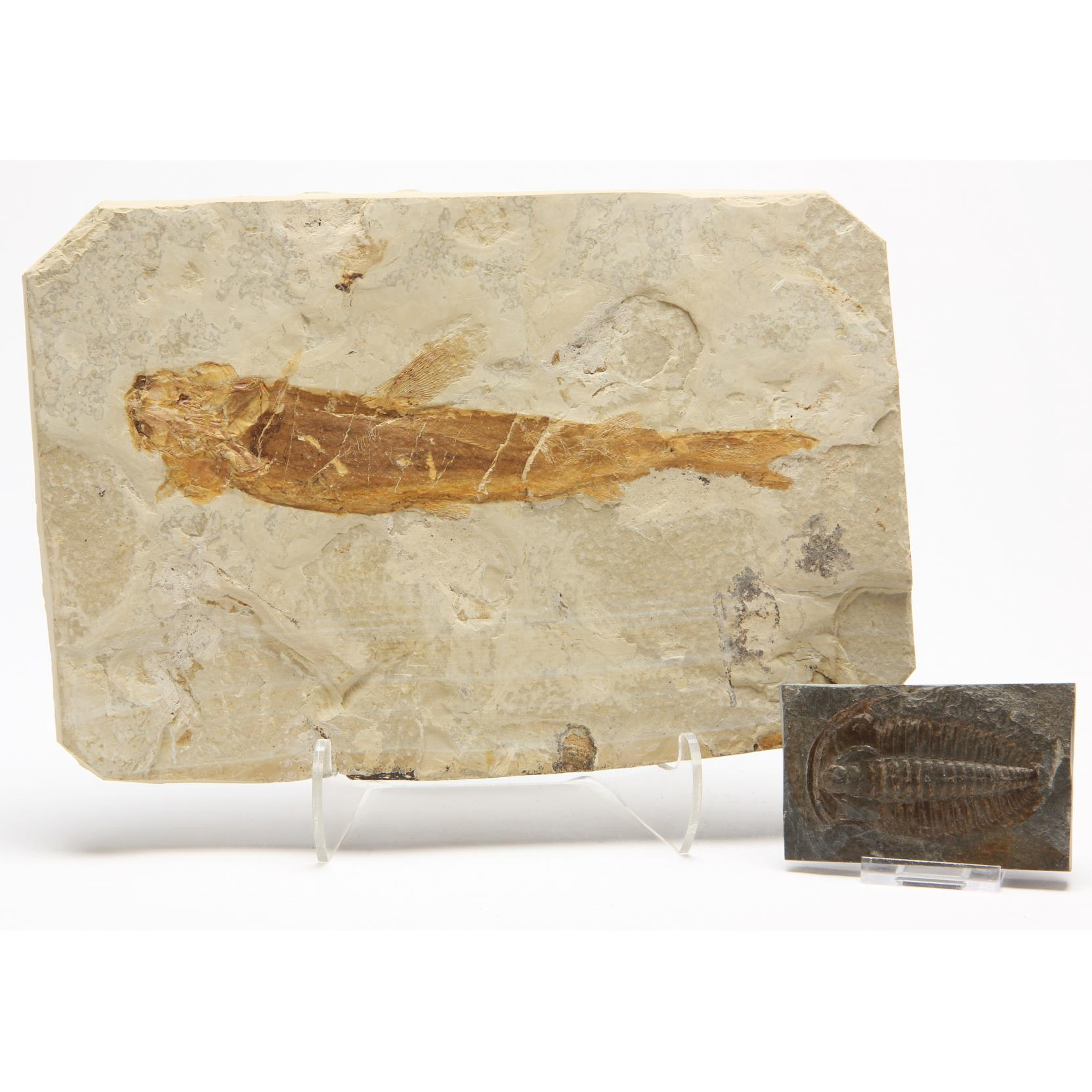two-chinese-aquatic-fossils