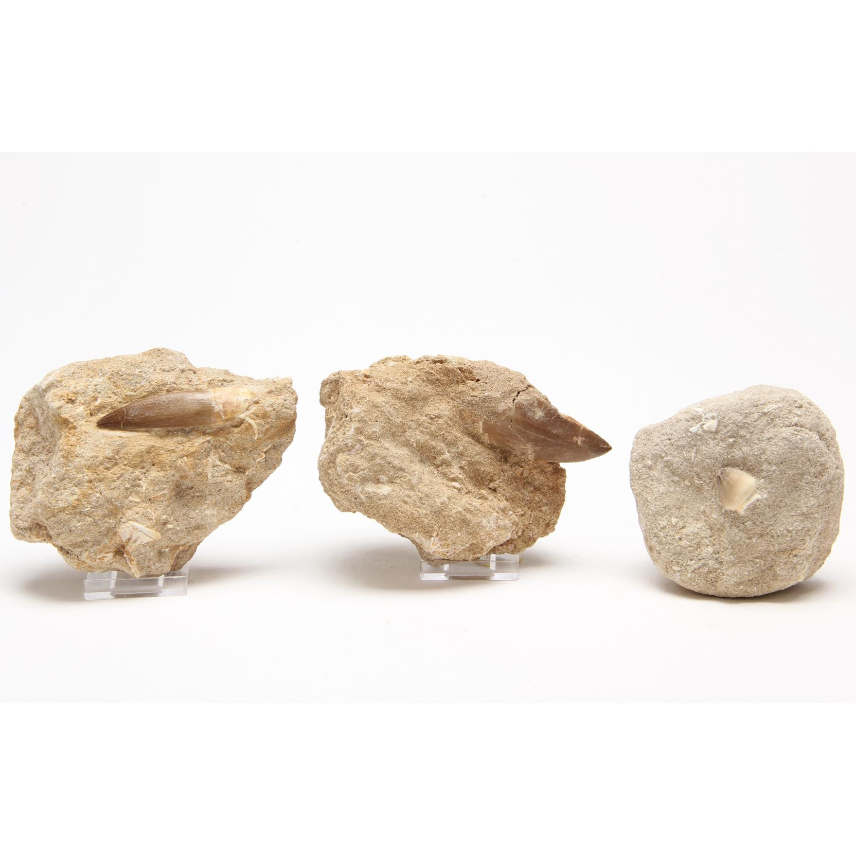 three-individual-mosasaur-teeth