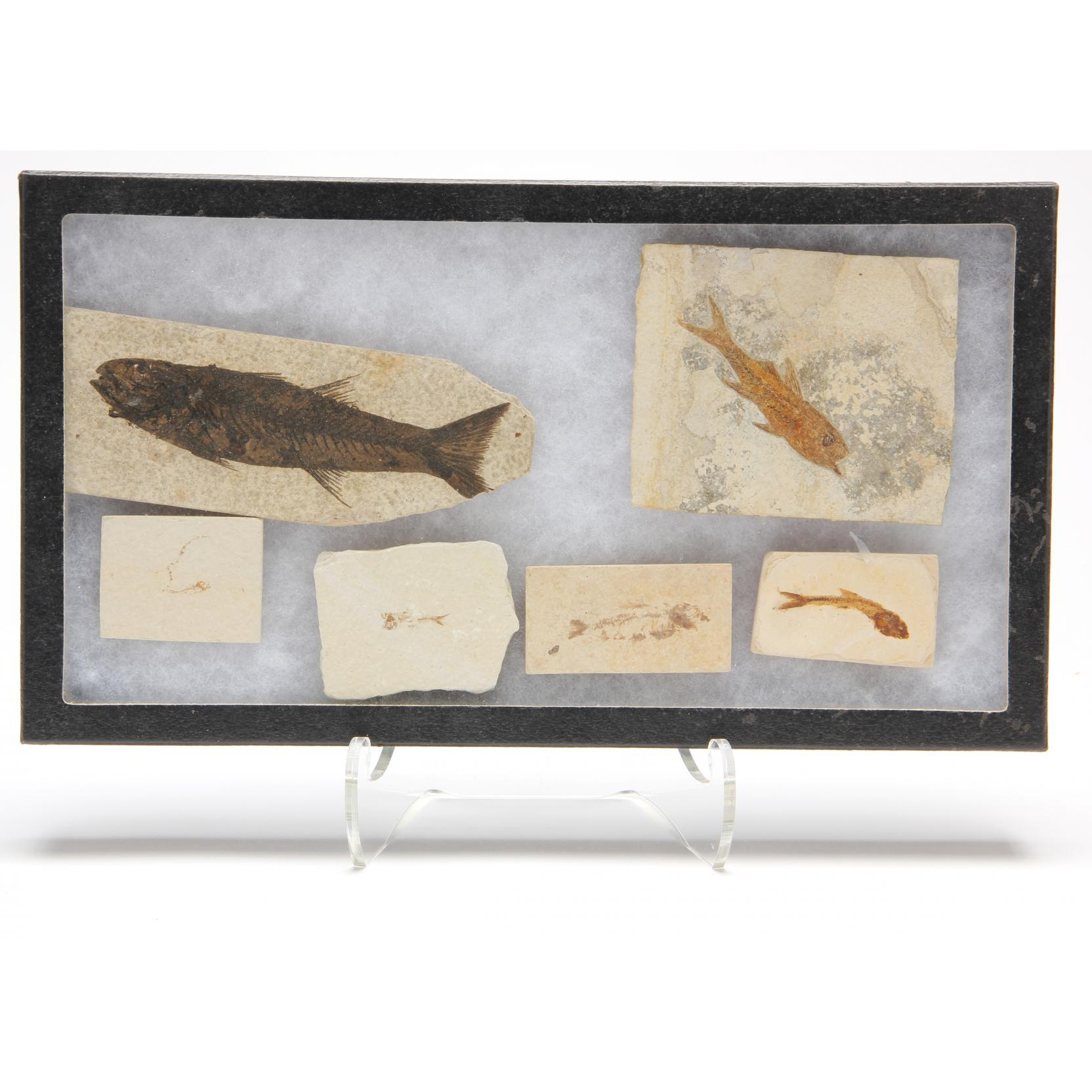 six-fossil-fish-from-texas