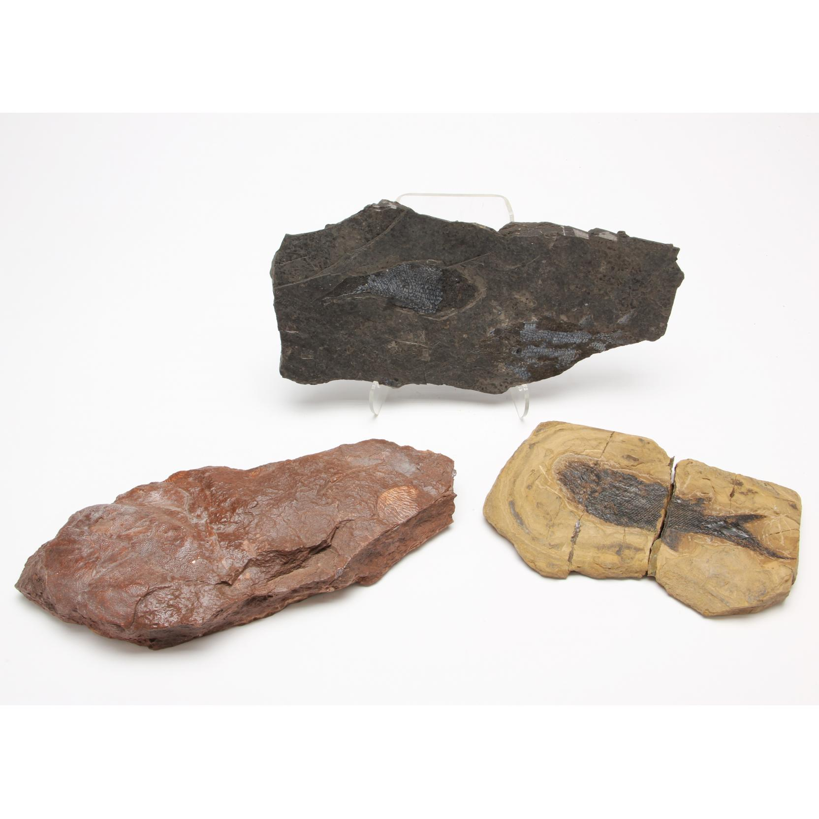 three-fossil-fish