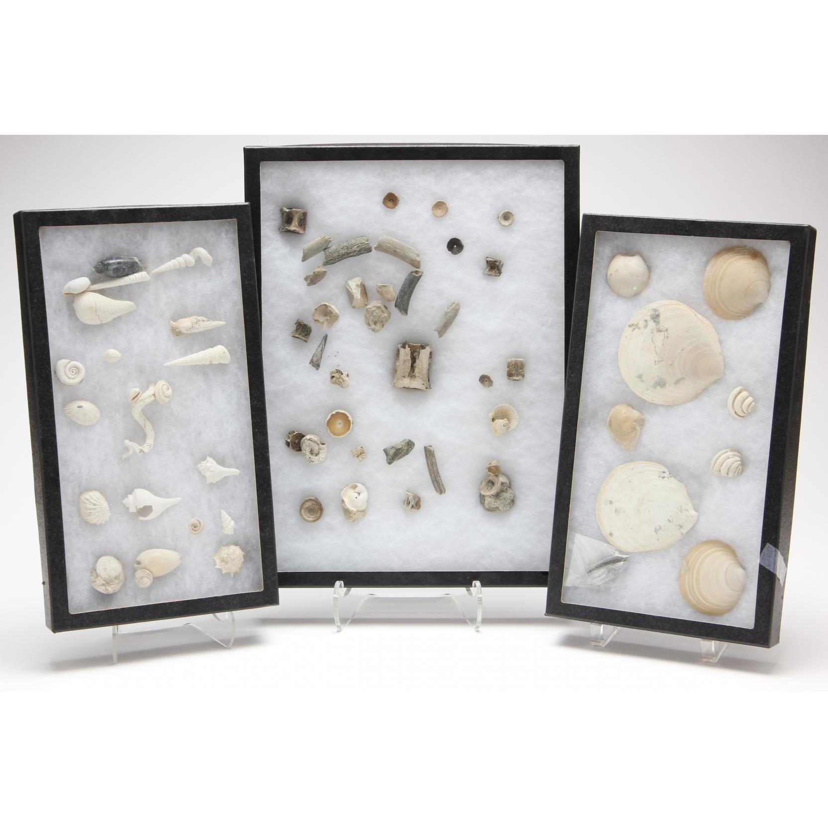 three-large-riker-mounts-of-marine-fossils