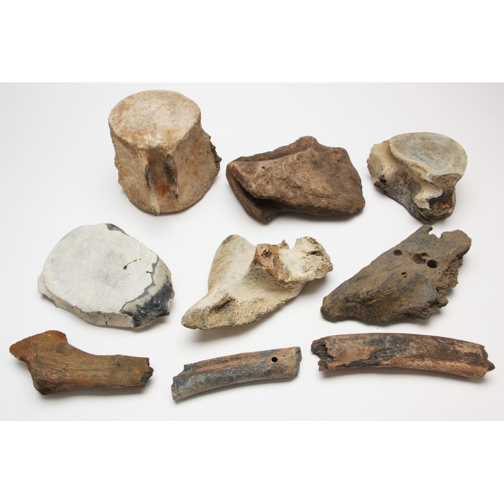 nine-fossilized-whale-bones-and-bone-fragments