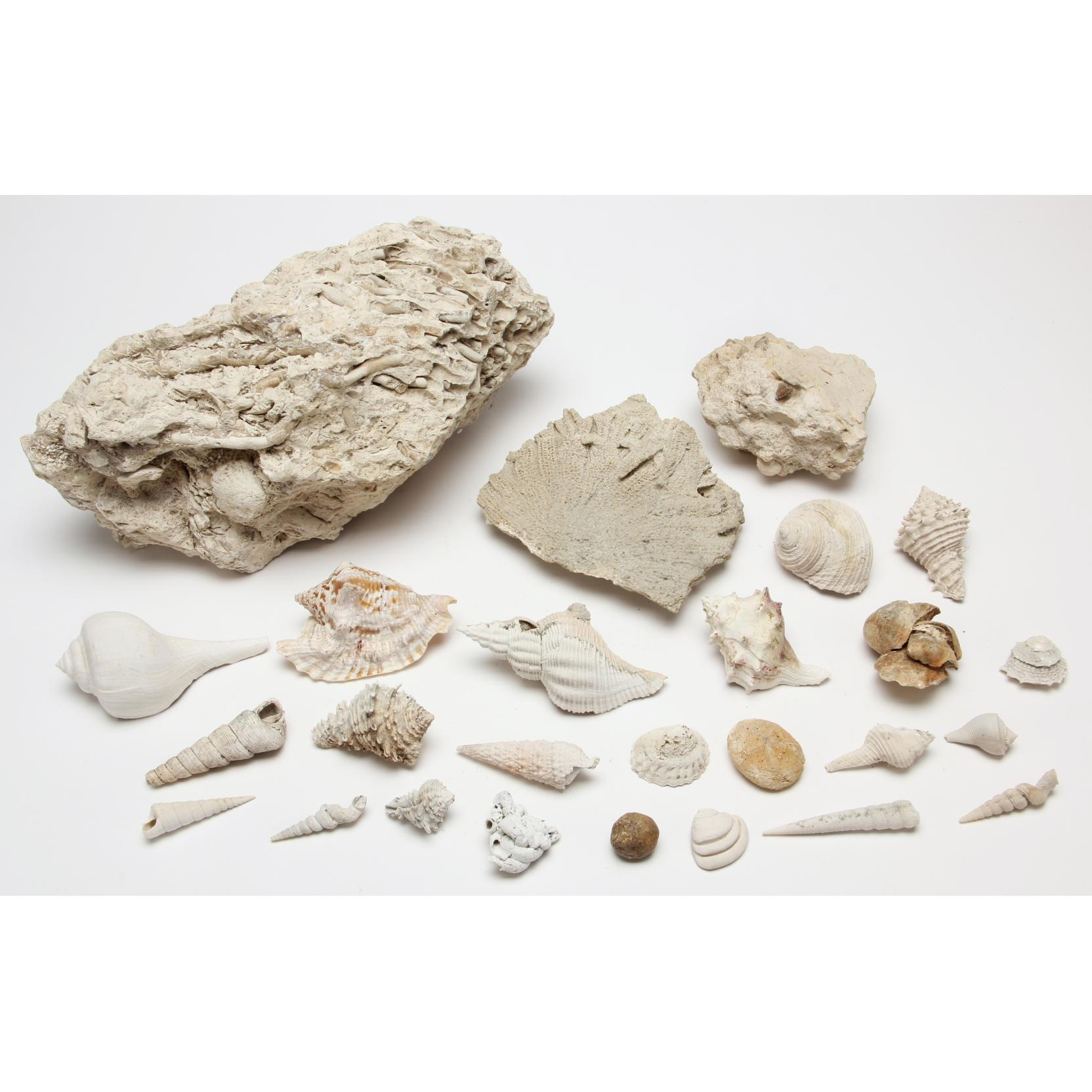 florida-fossil-grouping