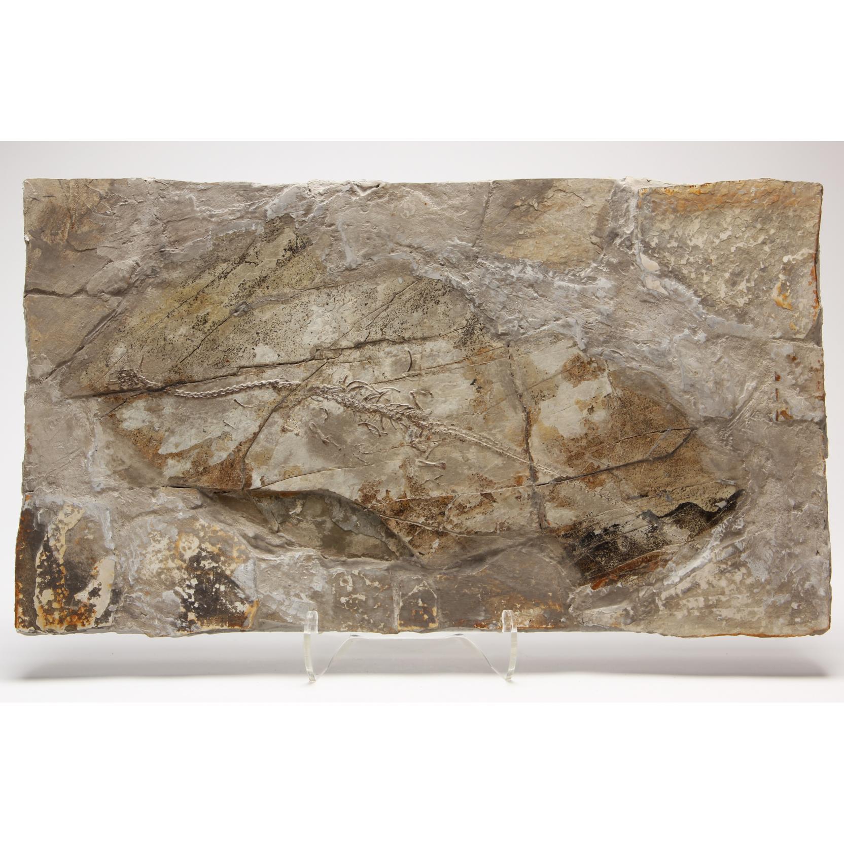 sinohydrosaur-fossil-plaque