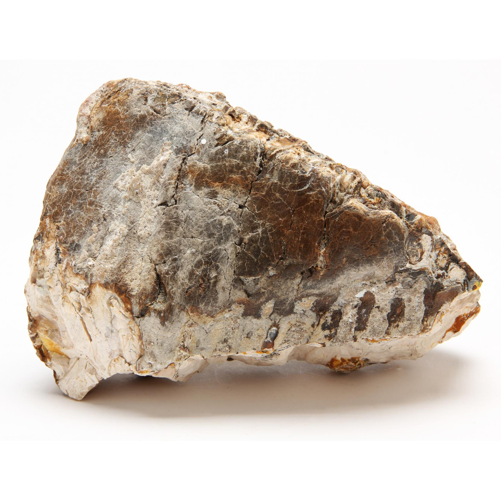 fossil-mammoth-tooth