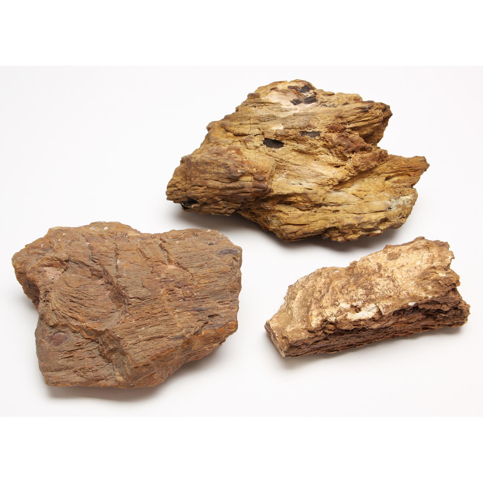 three-pieces-of-petrified-wood