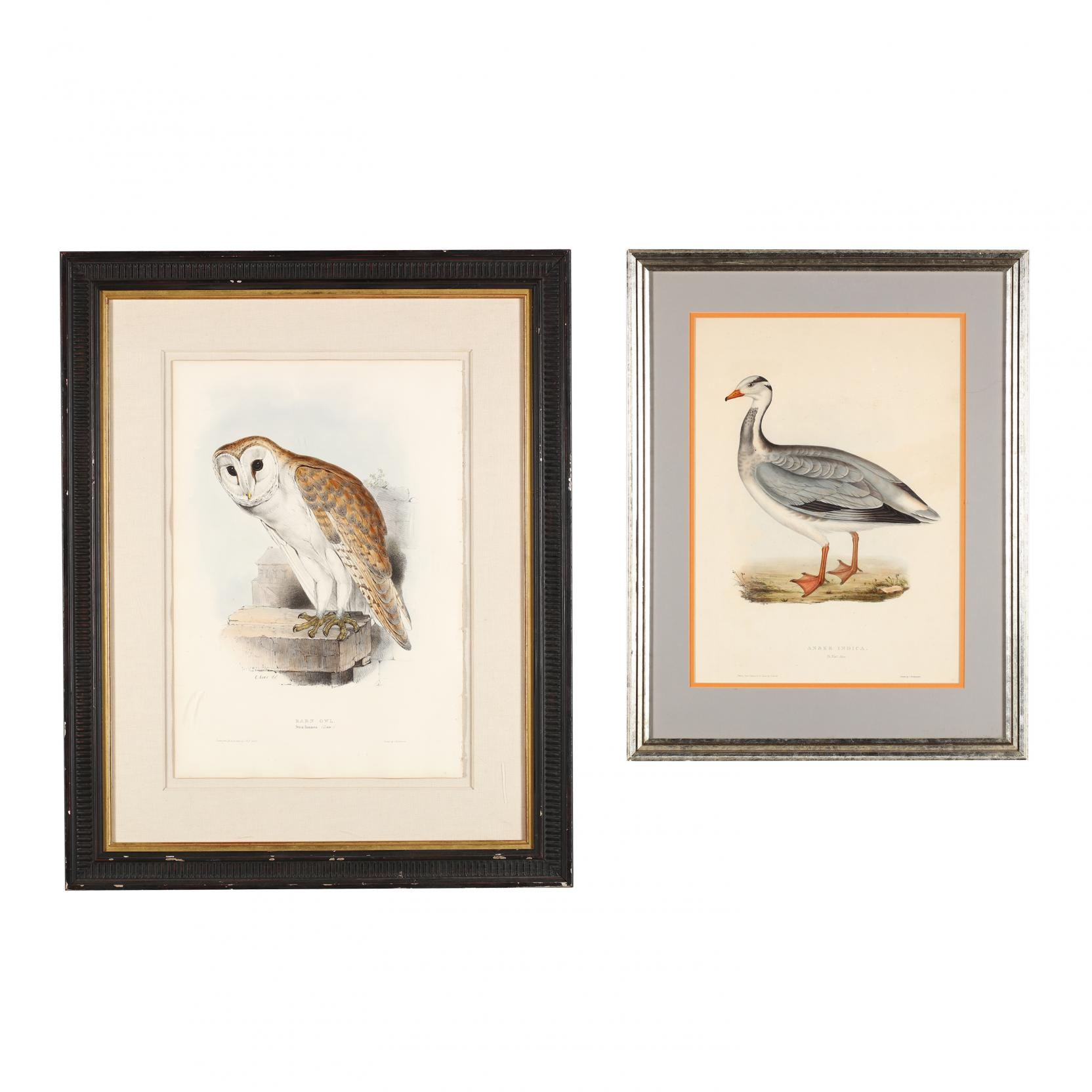 two-framed-prints-from-gould-s-bird-monographs