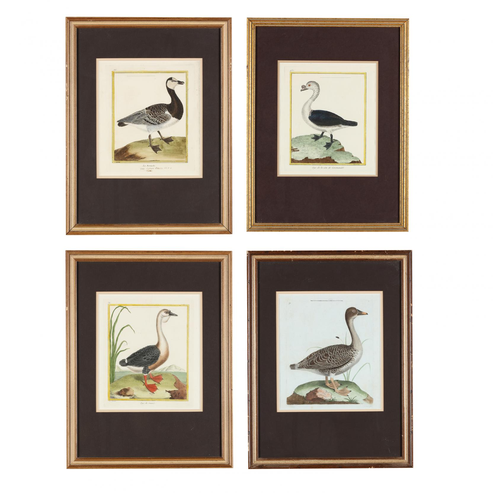 francois-nicolas-martinet-french-circa-1725-1804-four-hand-colored-engravings-from-i-histoire-naturelle-des-oiseaux-i