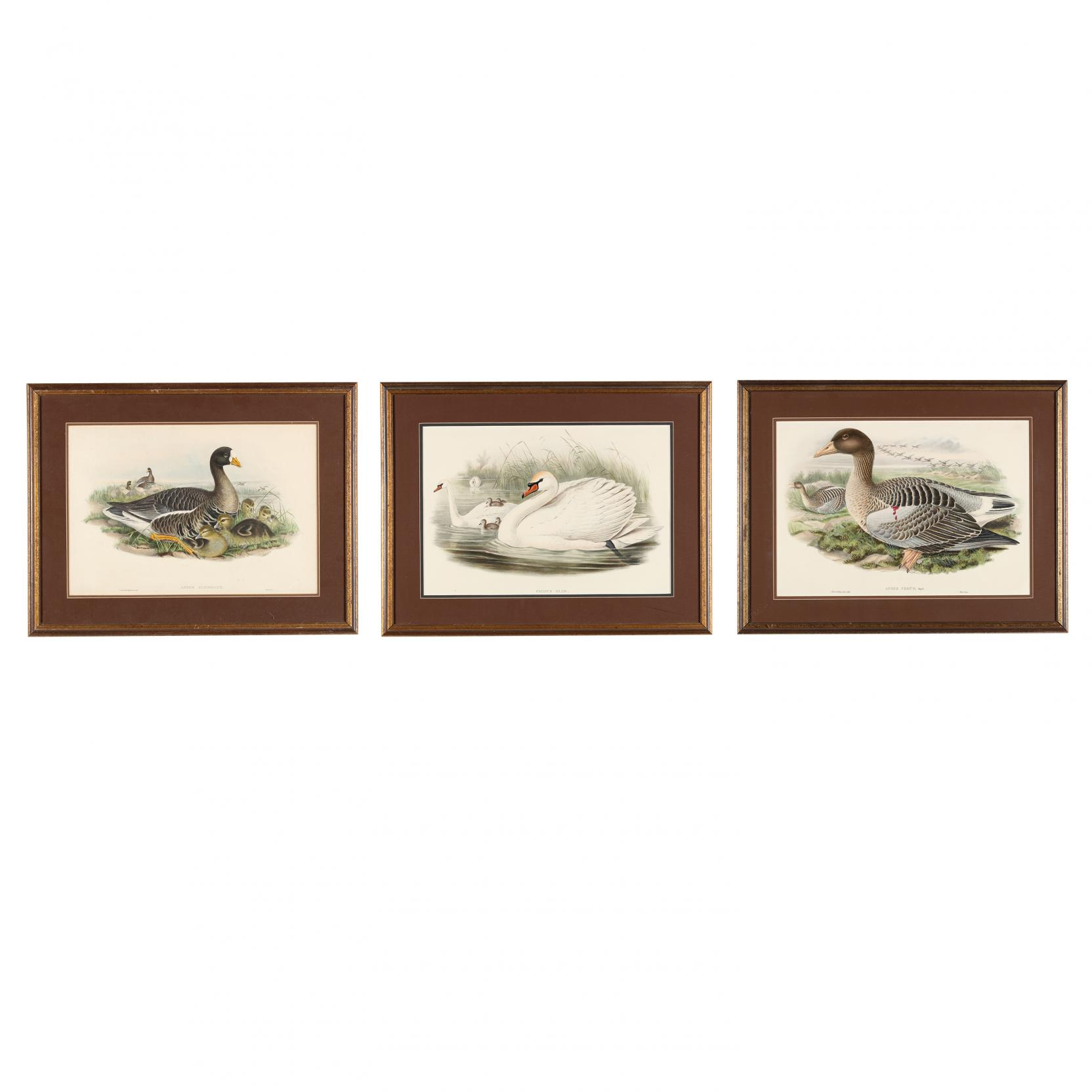 j-gould-h-c-richter-19th-century-three-hand-colored-lithographs-from-john-gould-s-i-the-birds-of-great-britain-i