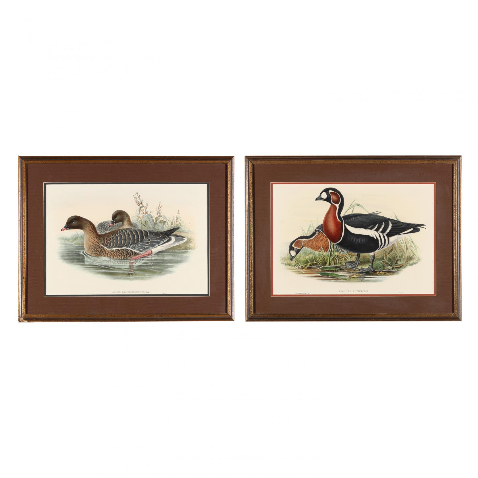 pair-of-goose-prints-from-john-gould-s-i-the-birds-of-great-britain-i