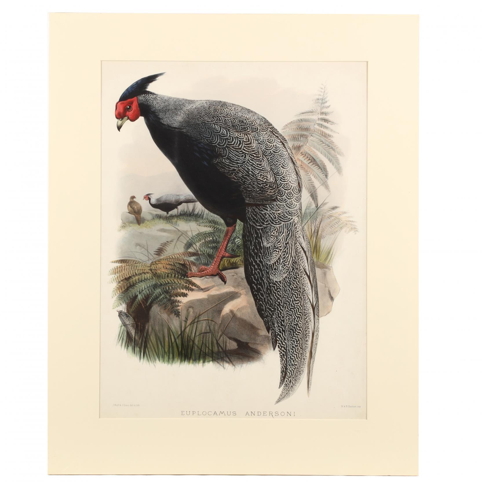 after-joseph-wolf-by-j-smit-19th-century-euplocamus-andersoni-anderson-s-pheasant