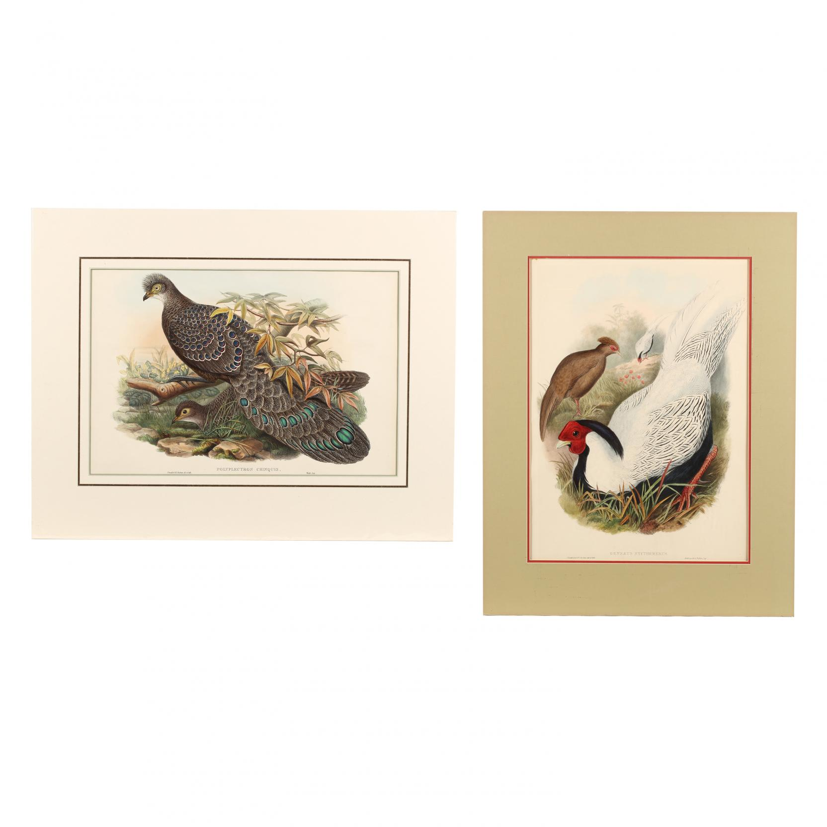 j-gould-h-c-richter-19th-century-two-pheasant-prints-from-john-gould-s-i-the-birds-of-asia-i