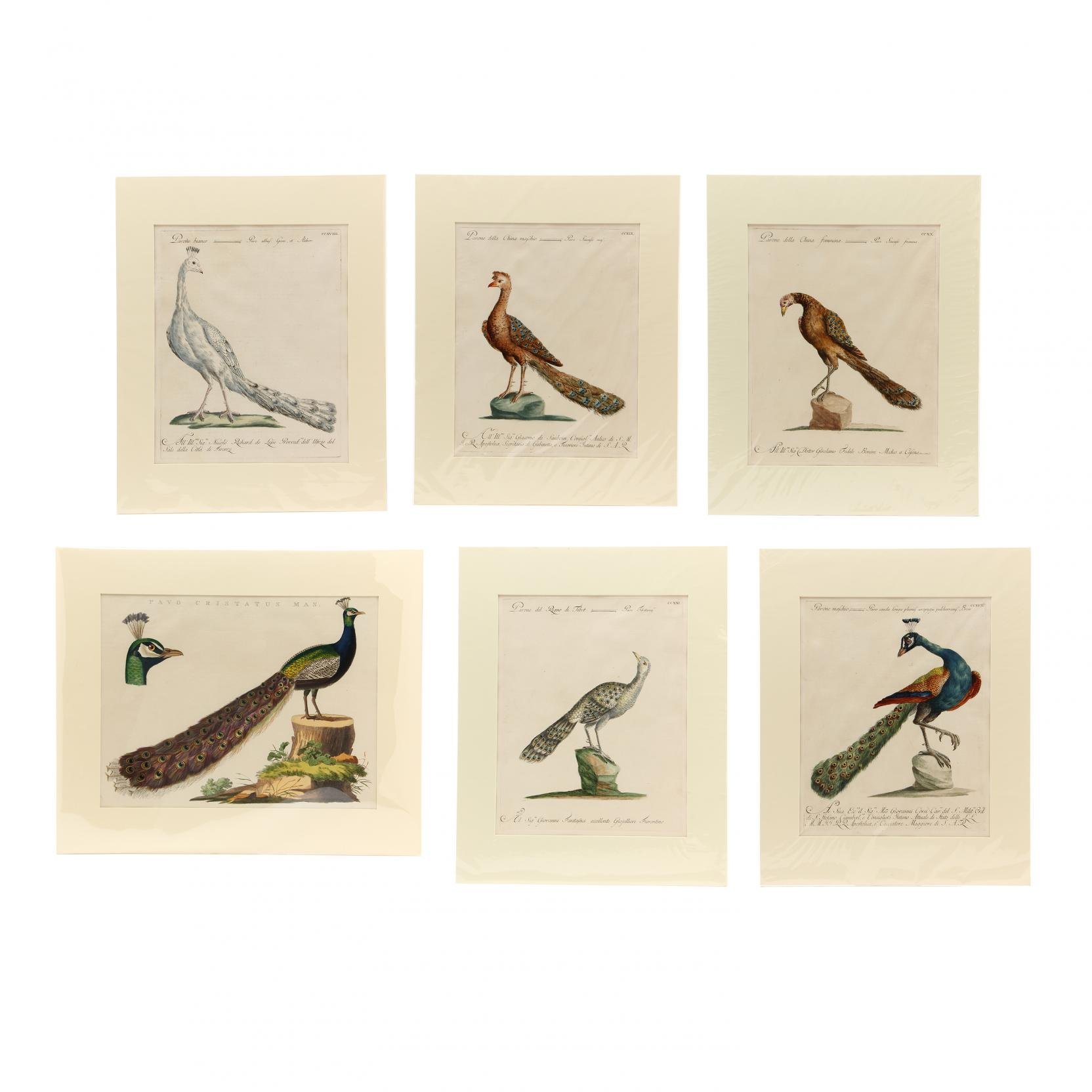 group-of-6-18th-century-prints-depicting-peacocks-by-manetti-and-nozeman