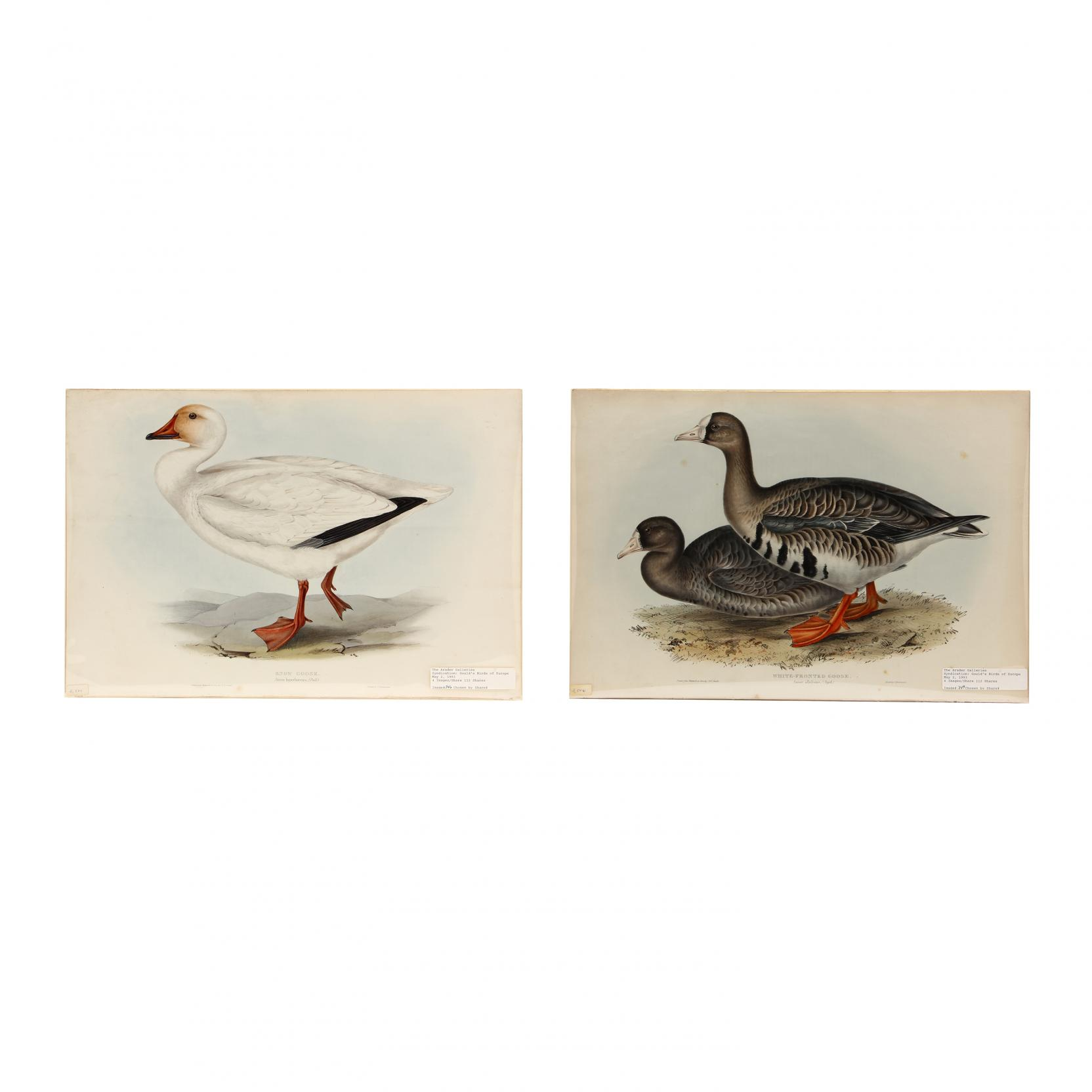 j-e-gould-british-19th-century-pair-of-goose-prints-from-john-gould-s-i-the-birds-of-europe-i