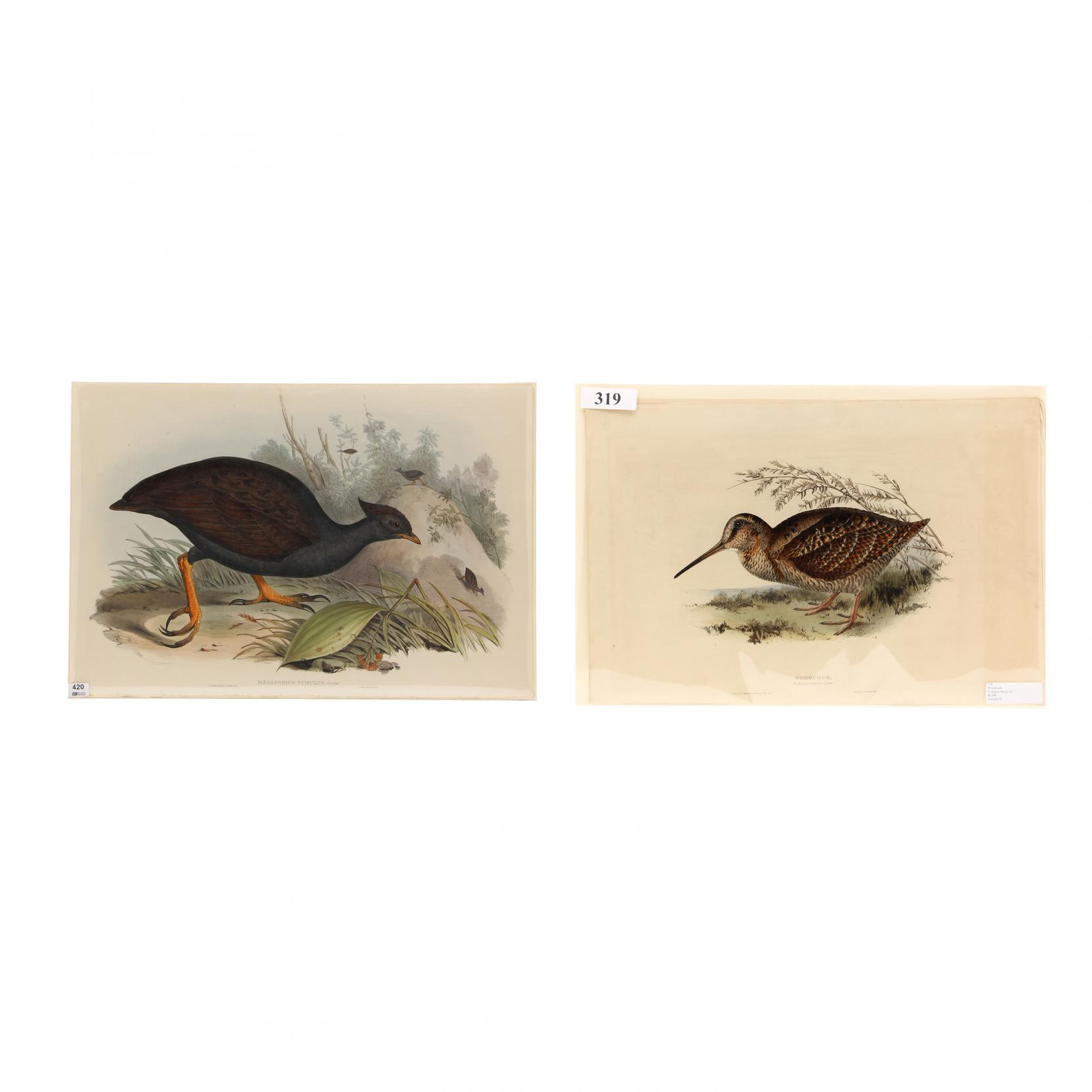 j-e-gould-h-c-richter-british-19th-century-two-prints-from-john-gould-s-i-the-birds-of-europe-i