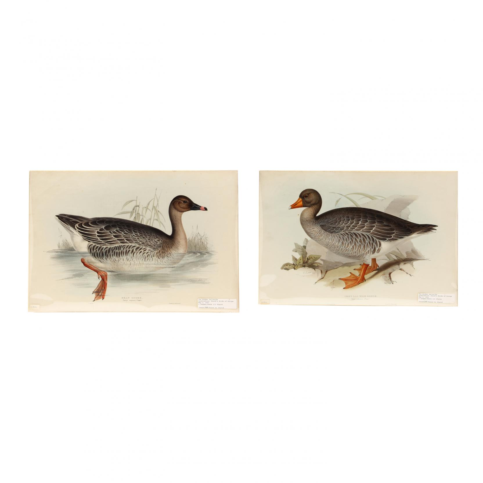 edward-lear-british-1812-1888-pair-of-goose-prints-from-john-gould-s-i-the-birds-of-europe-i