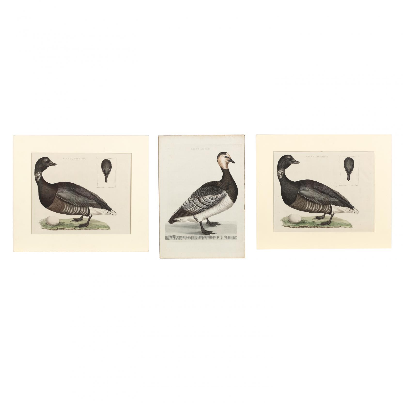 cornelius-nozeman-dutch-1712-1786-three-goose-prints