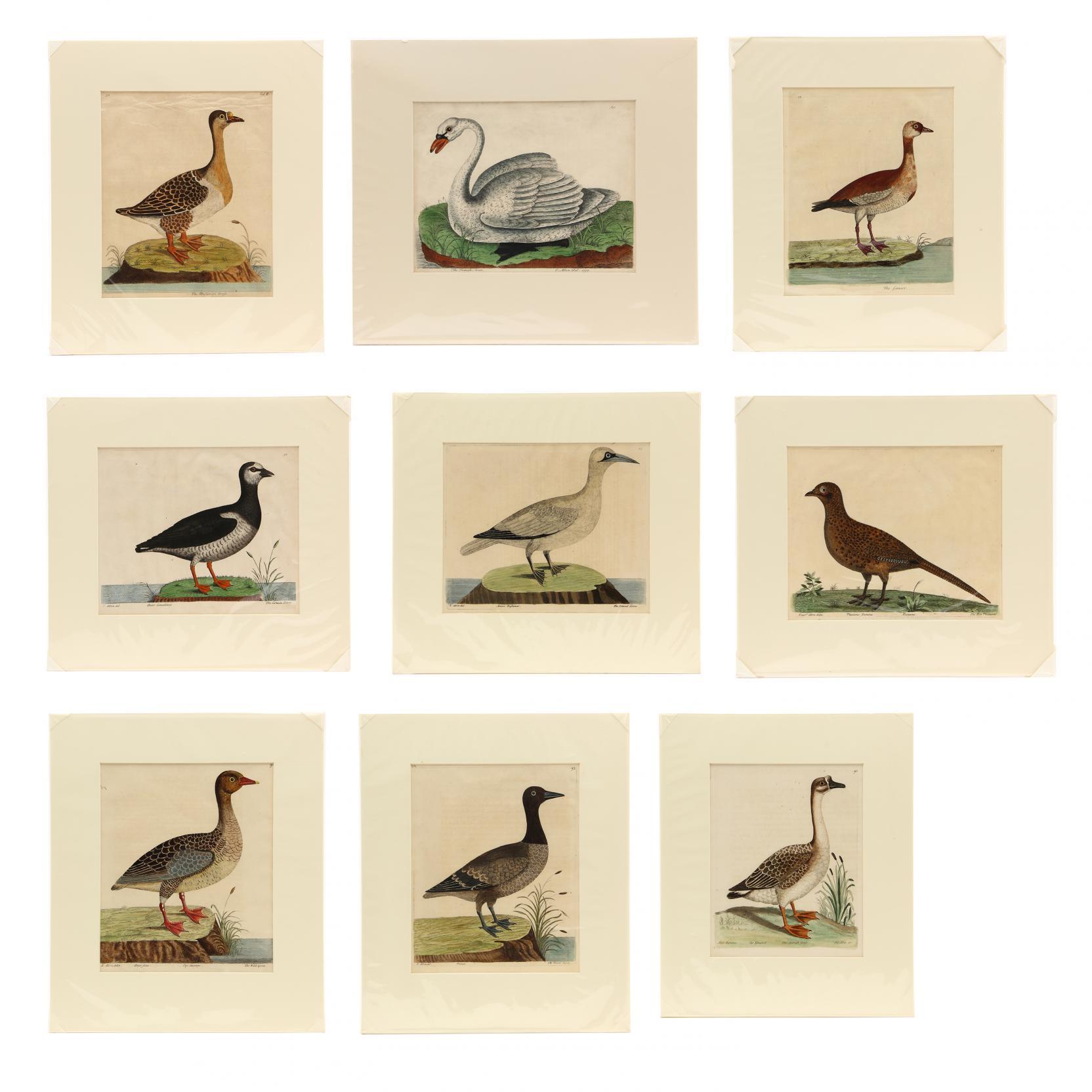 eleazar-albin-british-active-1713-1759-group-of-9-ornithological-prints