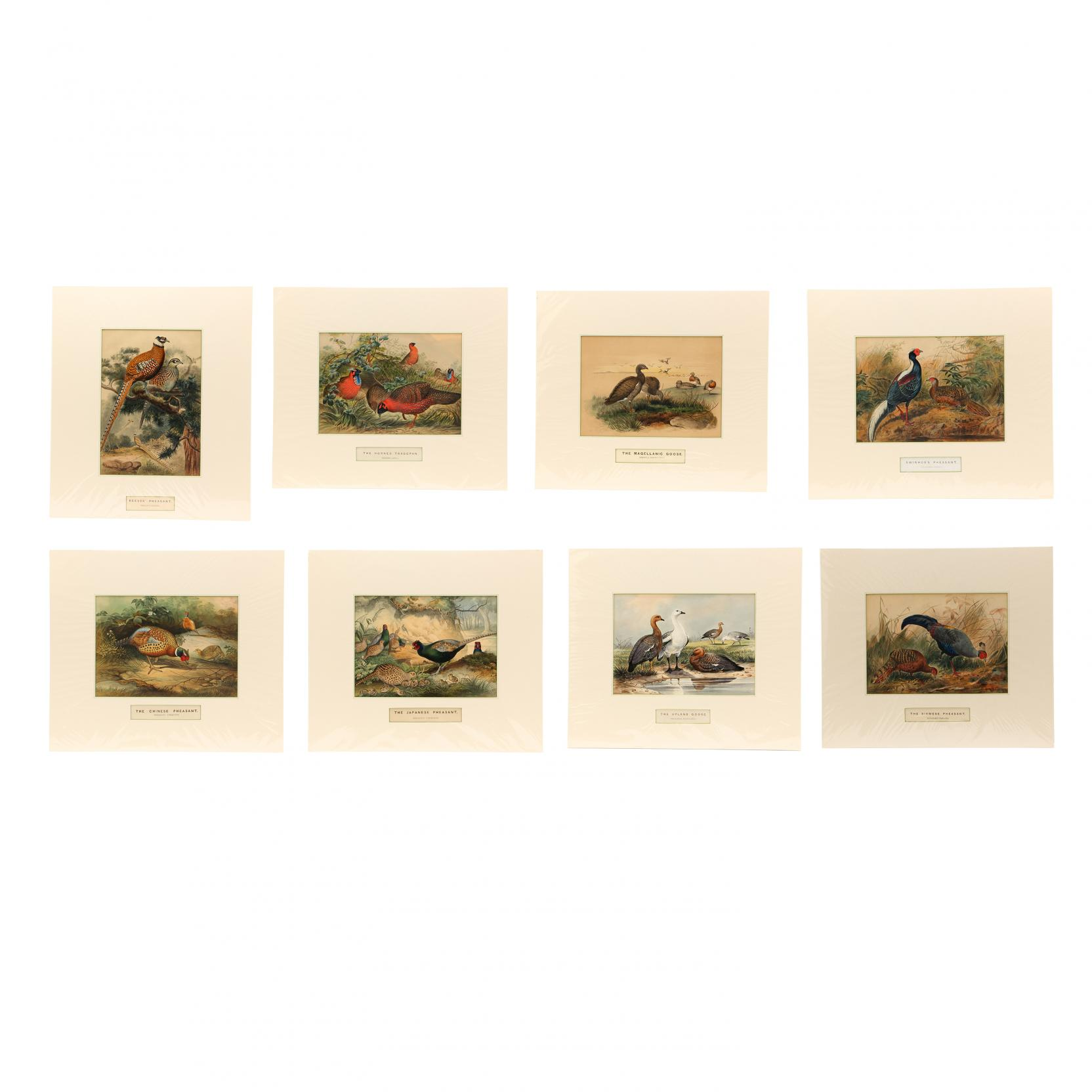joseph-wolf-german-1820-1899-group-of-8-prints-from-i-zoological-sketches-i