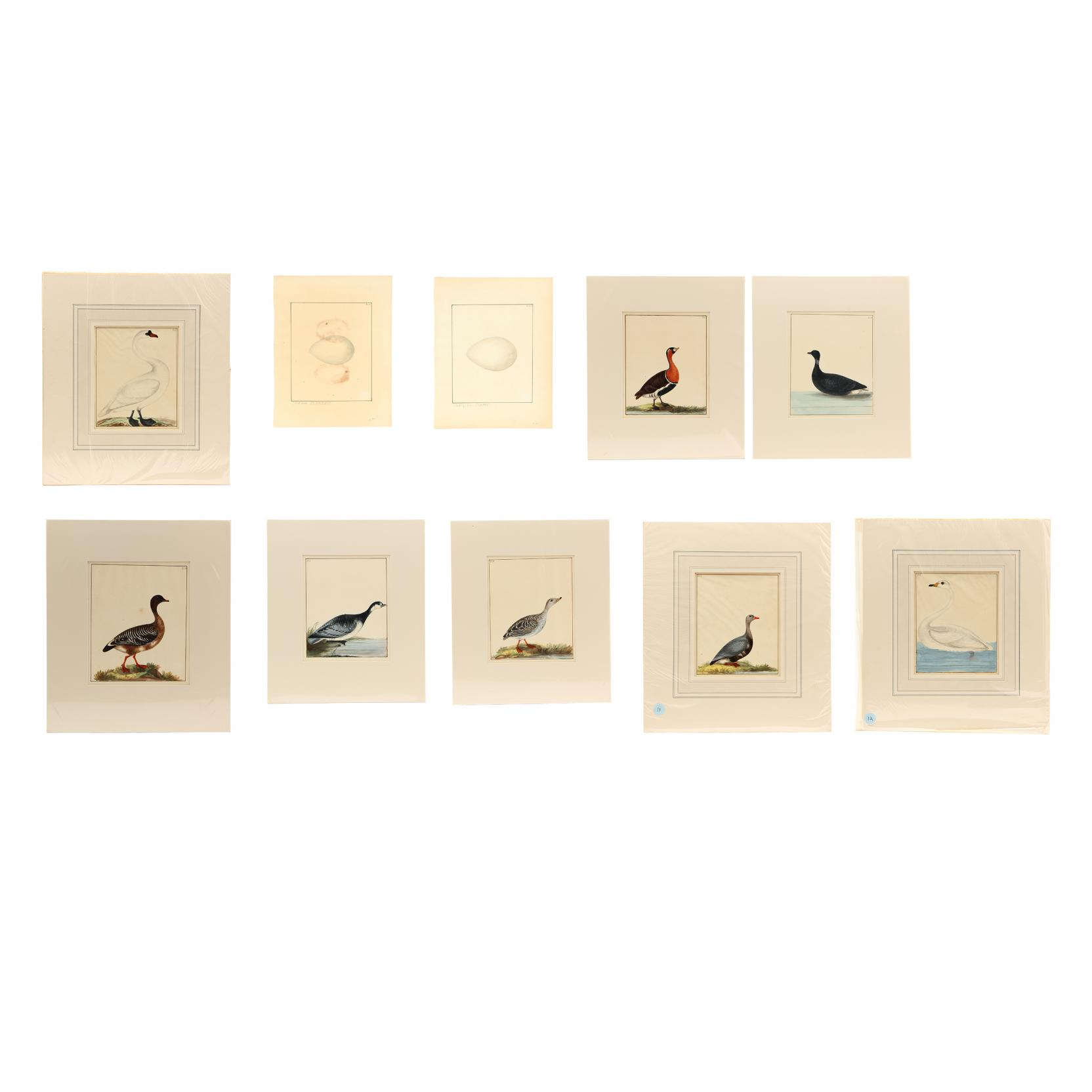 william-lewin-british-1747-1795-group-of-10-watercolor-illustrations-from-i-the-birds-of-great-britain-with-their-eggs-accurately-figured-i