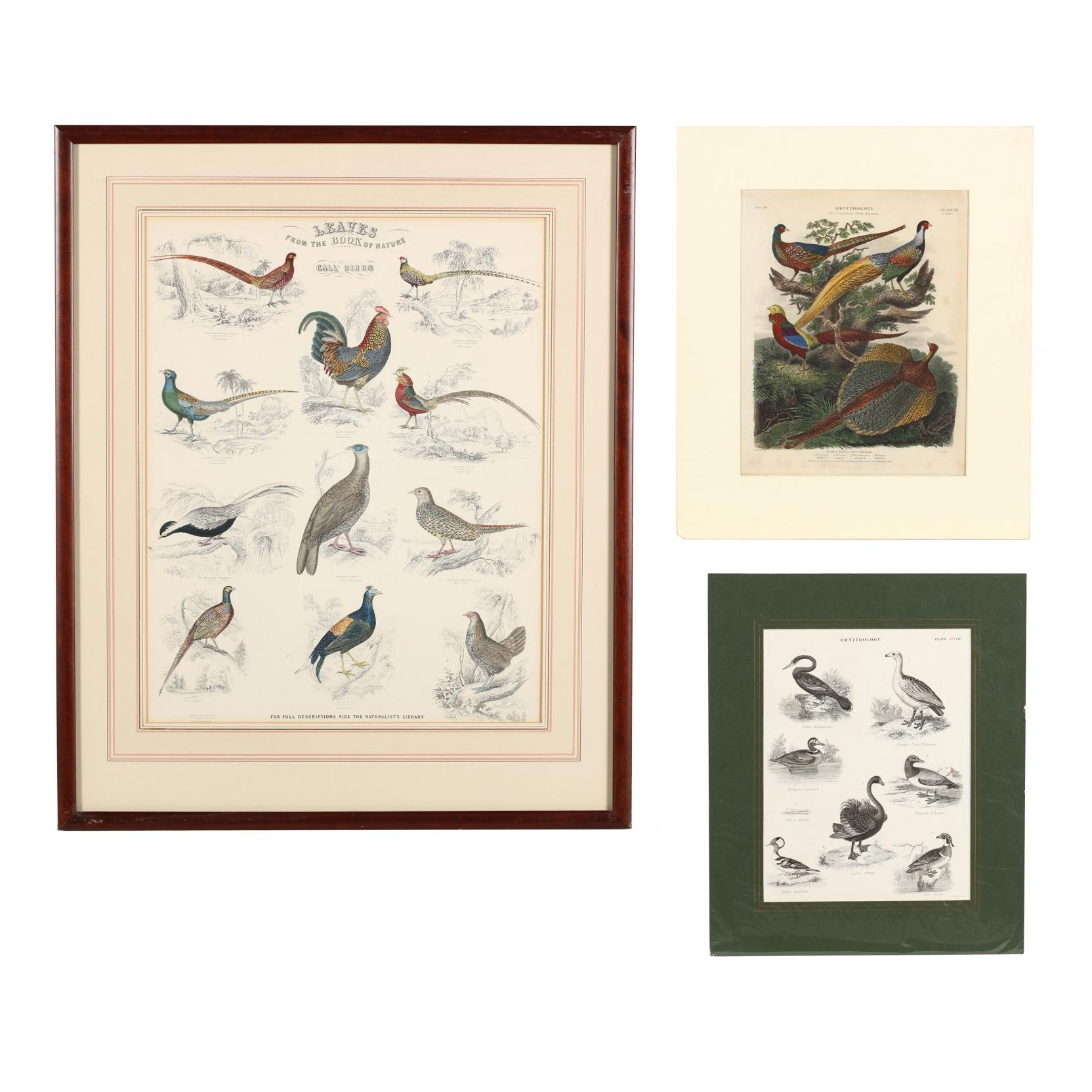 three-19th-century-engravings-picturing-multiple-birds