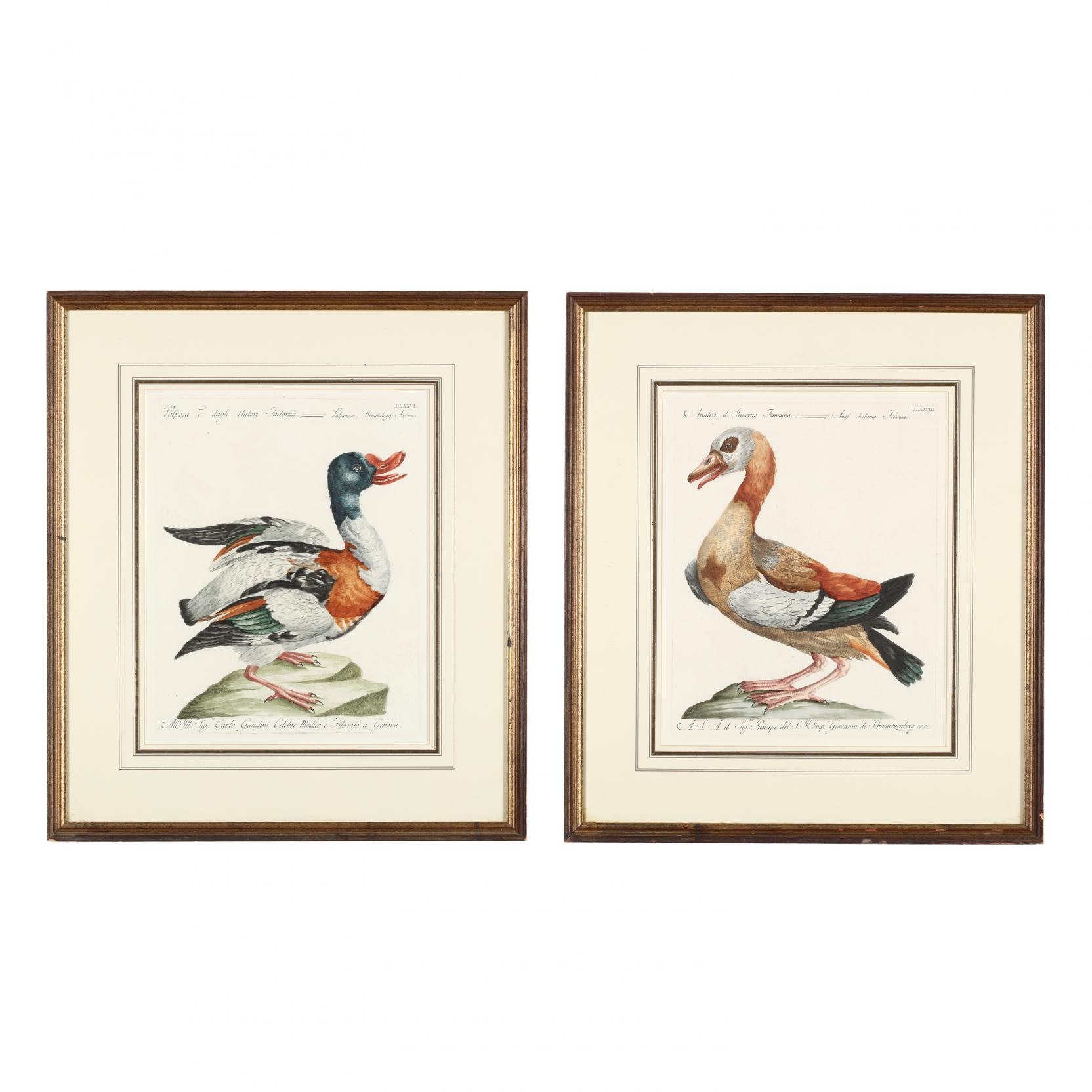 saverio-manetti-italian-1723-1784-pair-of-engravings-picturing-ducks