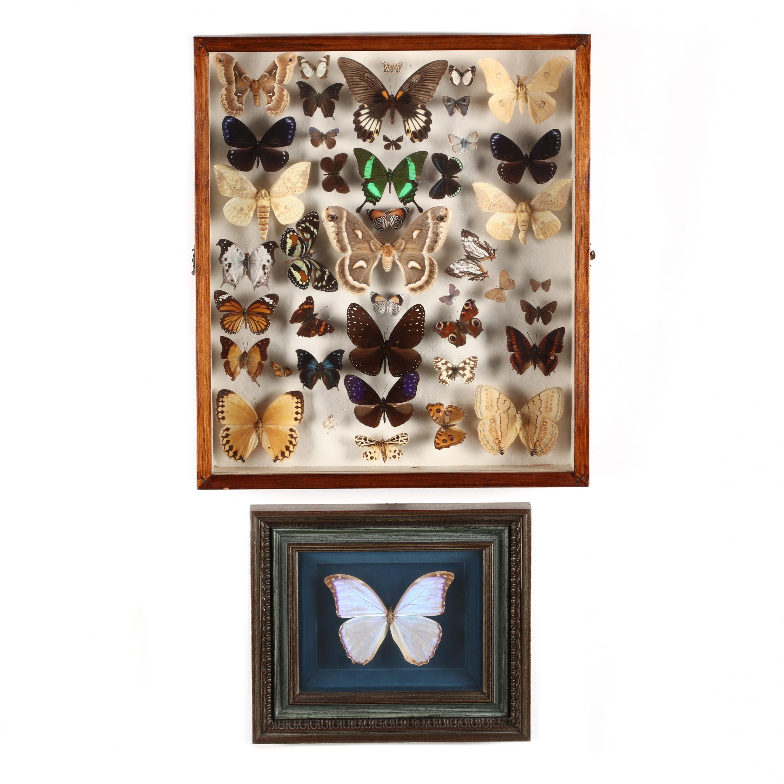 framed-butterfly-specimens