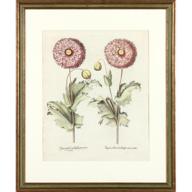 antique-botanical-engraving-by-basilius-besler-1561-1629