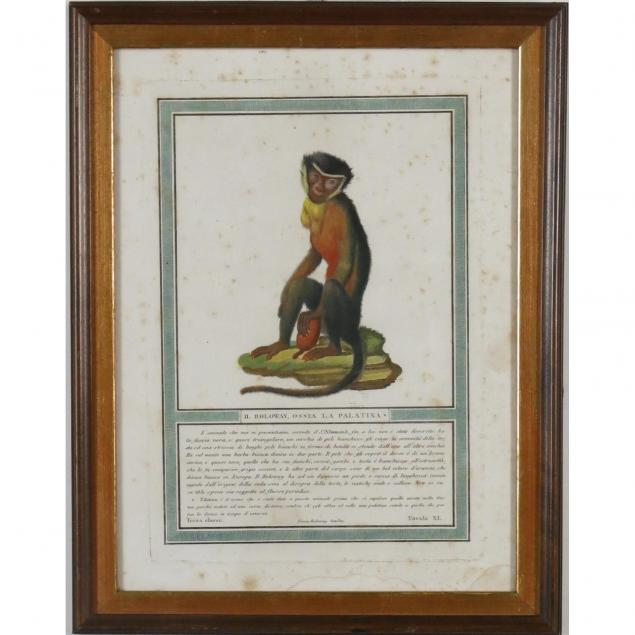 italian-handcolored-engraving-of-a-monkey
