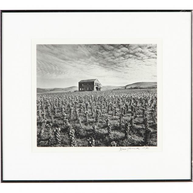 brussel-sprout-farm-art-photograph