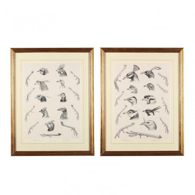 pair-of-anatomical-bird-studies-from-daniel-giraud-elliot-s-i-monograph-of-the-phasianidae-or-family-of-the-pheasants-i