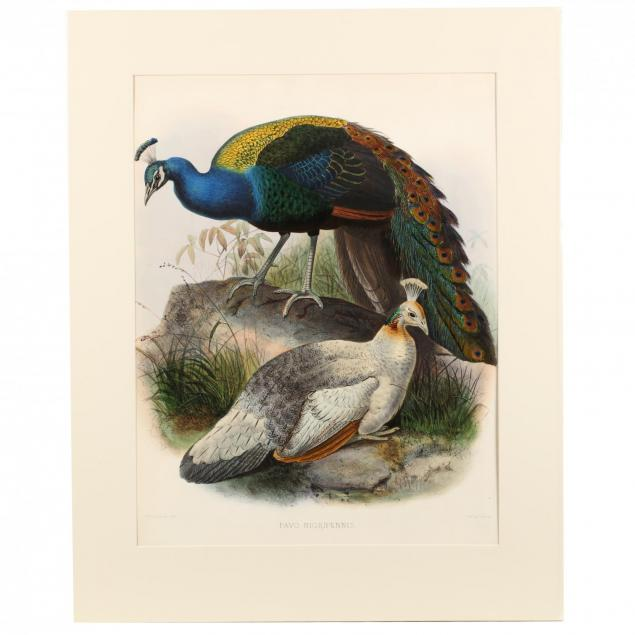 after-joseph-wolf-by-j-smit-19th-century-pavo-nigripennis-black-shouldered-pea-fowl