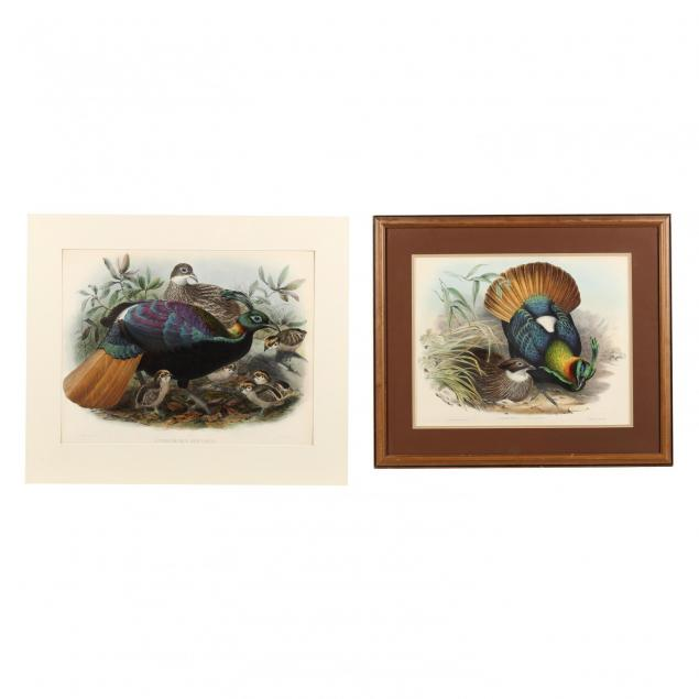 two-hand-colored-lithographs-picturing-the-lophophorus-impeyanus-himalayan-monal