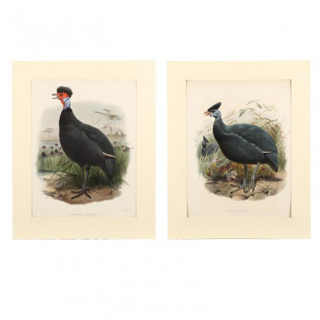 after-joseph-wolf-by-j-smit-19th-century-two-prints-picturing-guinea-fowl