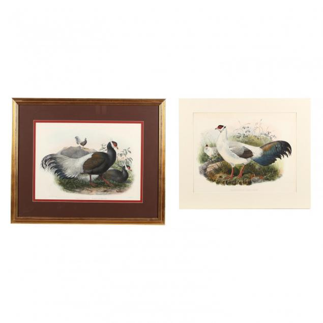 two-prints-depicting-eared-pheasants-from-daniel-giraud-elliot-s-i-monograph-of-the-phasianidae-or-family-of-the-pheasants-i