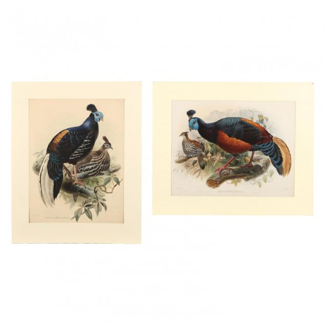 after-joseph-wolf-by-j-smit-19th-century-two-partridge-prints