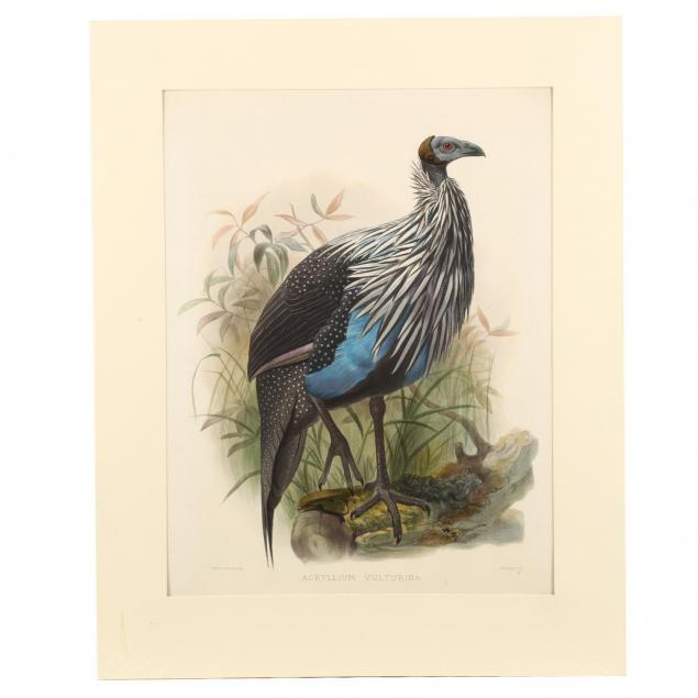 after-joseph-wolf-by-j-smit-19th-century-acryllium-vulturina-vulturine-guinea-fowl