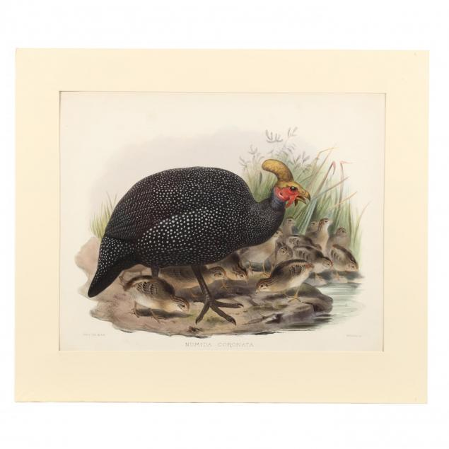 after-joseph-wolf-by-j-smit-19th-century-numida-coronata-crowned-guinea-fowl