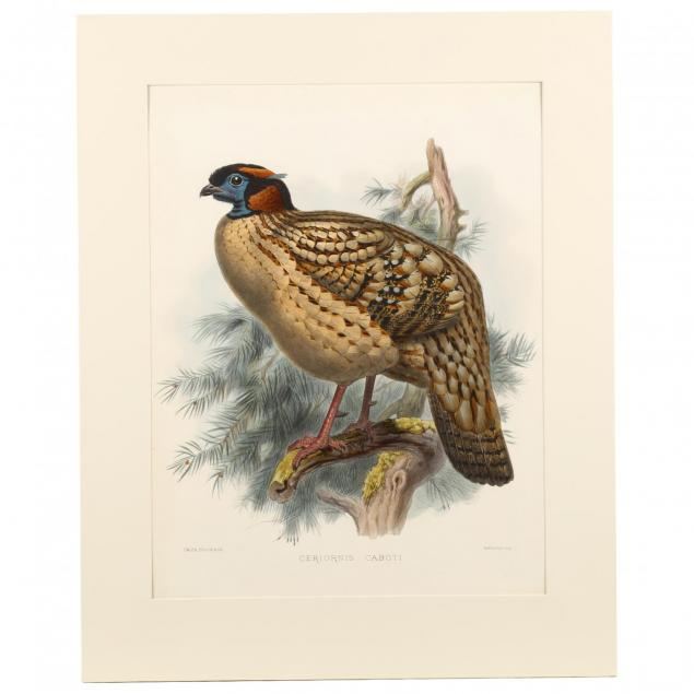 after-joseph-wolf-by-j-smit-19th-century-ceriornis-caboti-dr-cabot-s-horned-pheasant