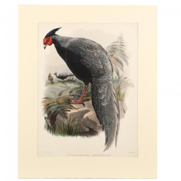 after-joseph-wolf-by-j-smit-19th-century-euplocamus-andersoni-anderson-s-pheasant
