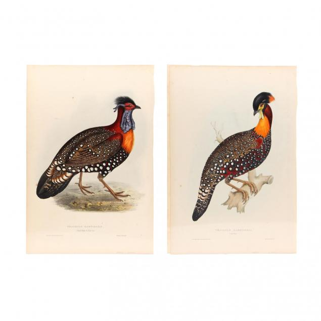 elizabeth-gould-1804-1841-two-prints-depicting-the-male-tragopan-hastings-ii