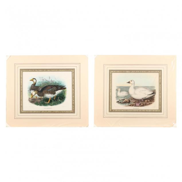 pair-of-prints-depicting-snow-geese-from-daniel-giraud-elliot-s-i-the-new-and-heretofore-unfigured-species-of-the-birds-of-north-america-i