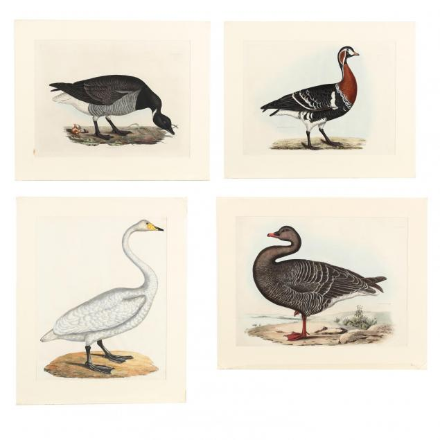 after-prideaux-john-selby-british-1788-1867-four-prints-and-a-title-page-from-i-selby-s-illustrations-of-british-ornithology-i
