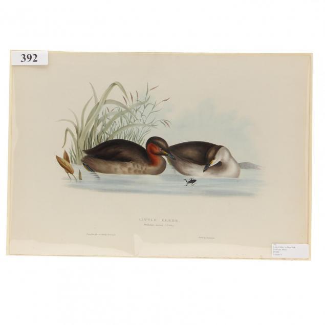 j-e-gould-british-19th-century-little-grebe-or-dabchick