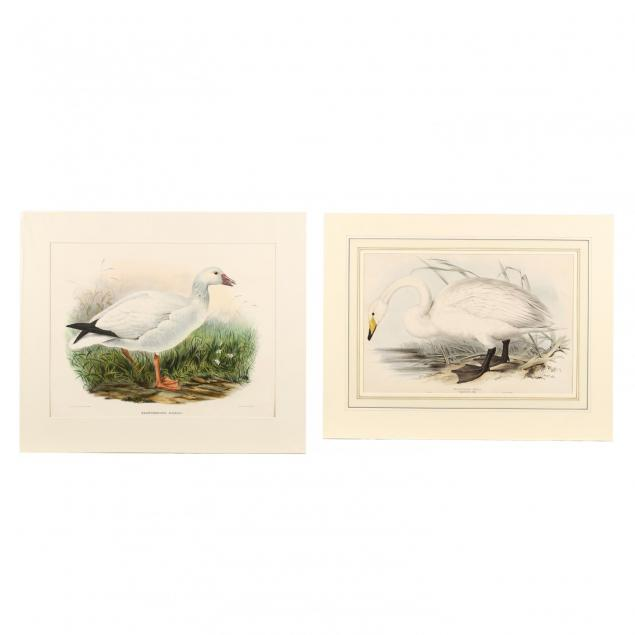 two-large-19th-century-prints-from-bird-monographs-gould-and-elliot