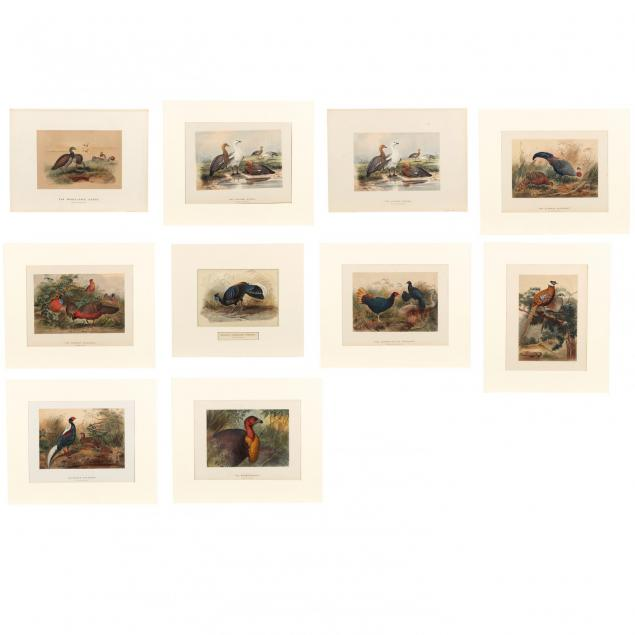 joseph-wolf-german-1820-1899-group-of-10-prints-from-i-zoological-sketches-i