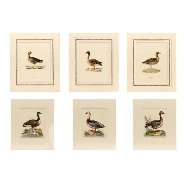 group-of-6-english-and-continental-goose-and-duck-prints