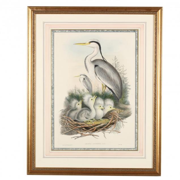 j-gould-h-c-richter-19th-century-ardea-cinerea-grey-heron