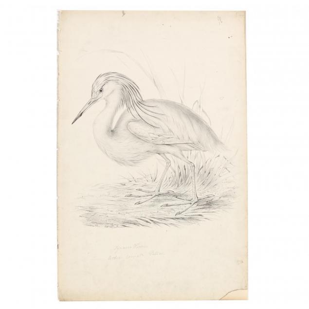 john-gould-british-1804-1881-rare-artist-proof-of-squacco-heron-ardea-comata-pallas
