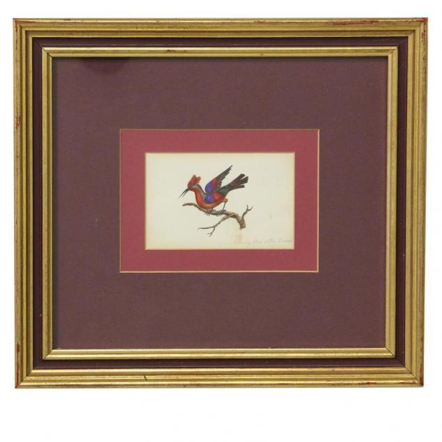 19th-century-watercolor-the-hummingbird-of-new-granada